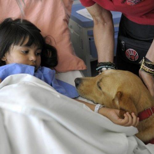 Universidad de EEUU avala uso de perros con fines terapéuticos en cuidados intensivos