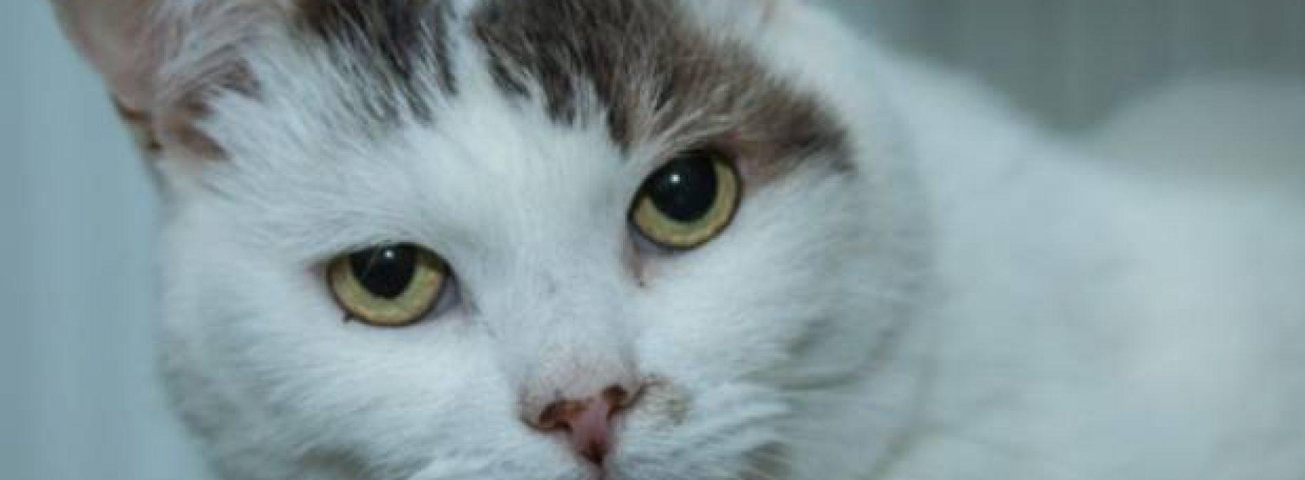 Coronan a gato por salvarle la vida a su dueña